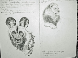 SGFA Journal - Susan E Poole African wild dog and male lion