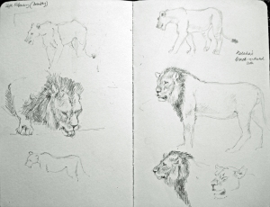 SGFA Journal - Susan E Poole Kalahari black maned lions study