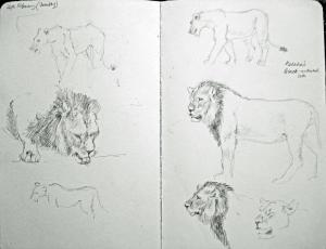 SGFA Journal - Susan E Poole Kalahari black maned lions study
