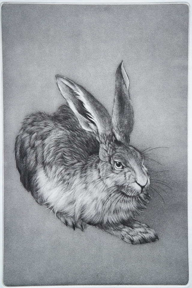 Durer's Hare 20 x 30 cm